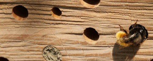 Bijenhotel detail 500x200